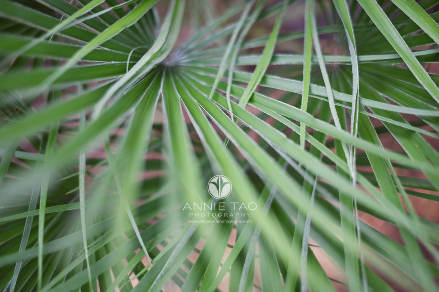 Houston-commercial-photography-long-green-leaves
