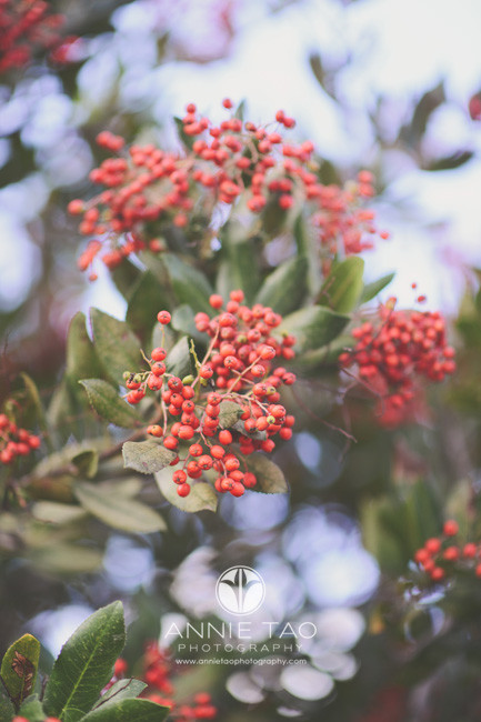 bay-area-lifestyle-photography-red-berries-on-bush