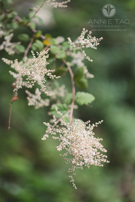 East-Bay-lifestyle-photography-fuzzy-white-flower-thingies-by-lake