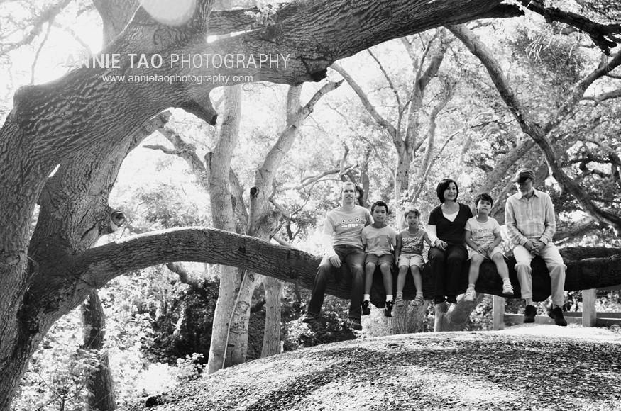 Palo-Alto-lifestyle-family-photography-family-sitting-on-horizontal-tree-branch-near-creek