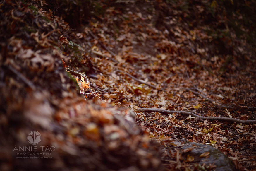 Bay-Area-Los-Altos-lifestyle-photography-one-orange-leaf-lit-by-a-sunbeam-in-the-woods