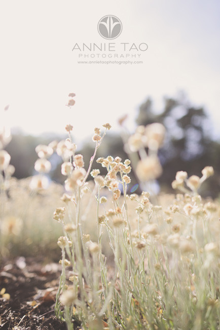 Bay-Area-lifestyle-photography-dried-plants