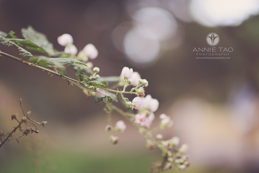 San-Francisco-lifestyle-photography-delicate-branch-of-pink-flowers