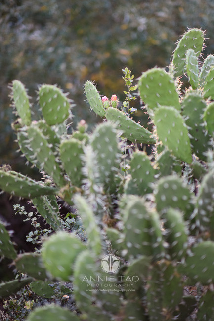 east-bay-lifestyle-photography-two-pink-flowering-cactus-flowers