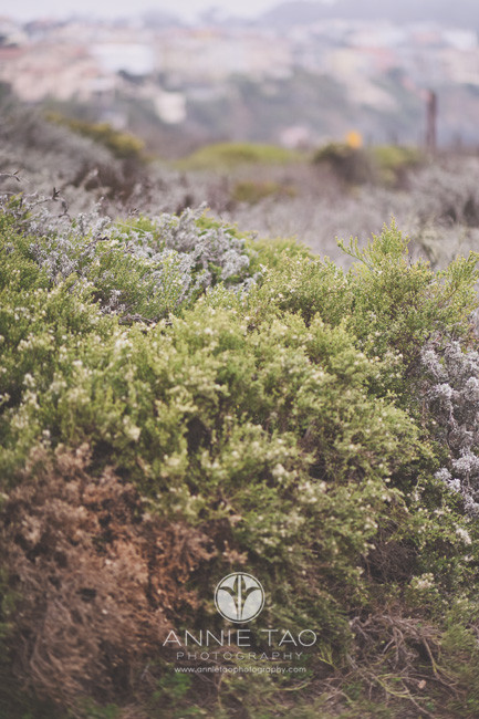 San-Francisco-lifestyle-photography-bushes-by-beach