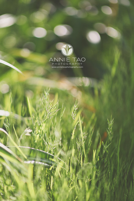 East-Bay-lifestyle-photography-green-blades-of-grass