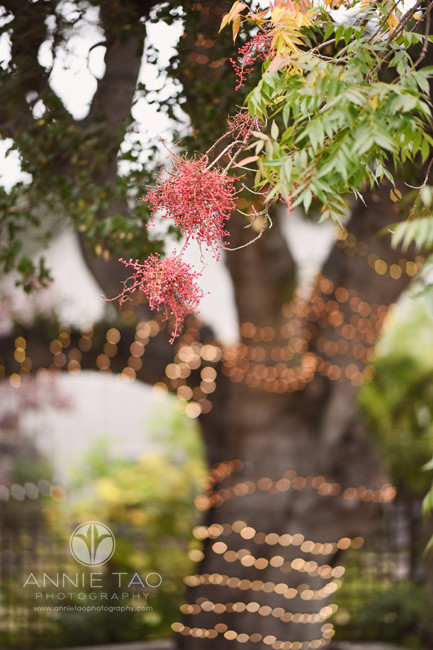 san-francisco-bay-area-lifestyle-photography-oak-tree-with-lights