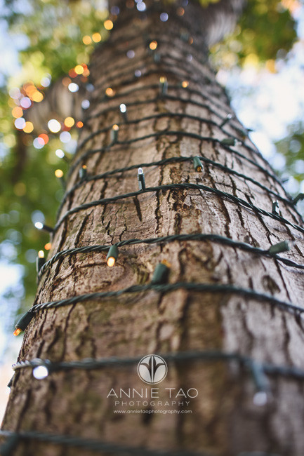 San-Francisco-lifestyle-photography-tree-trunk-wrapped-in-holiday-lights-upward-view
