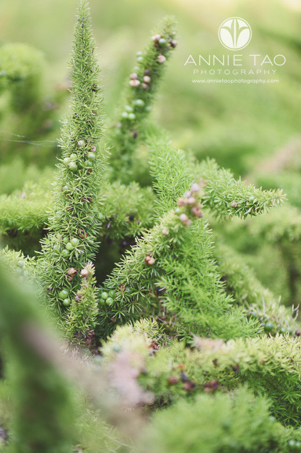 Bay-Area-lifestyle-photography-funny-furry-looking-green-leaves