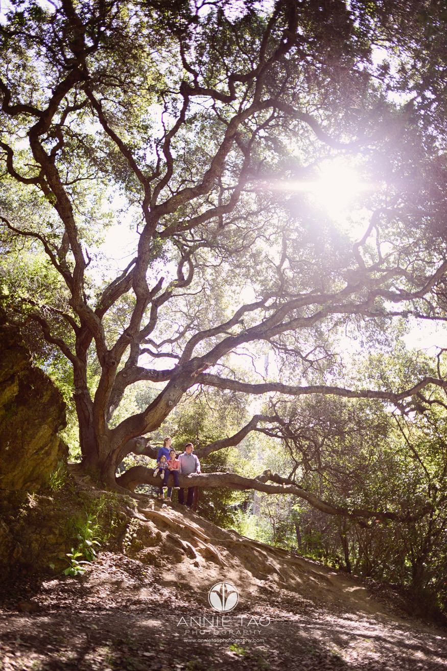 East-Bay-lifestyle-family-photography-family-on-windy-tree-on-cliff-LG