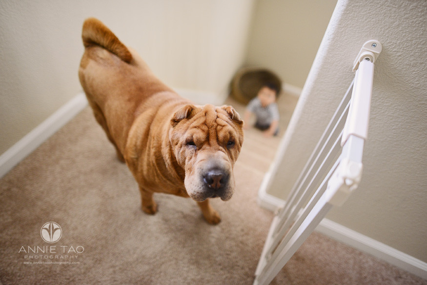 South-Bay-lifestyle-baby-photography-dog-at-top-of-stairs-and-baby-at-bottom