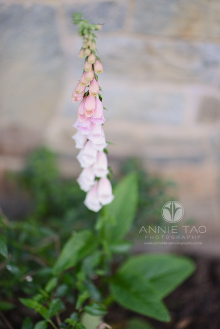 South-Bay-lifestyle-photography-pink-flowers