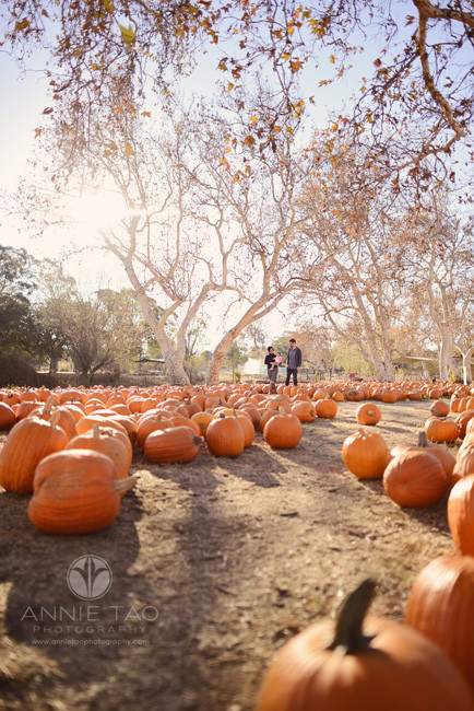 East-Bay-lifestyle-family-photography-family-of-three-strolling-in-pumpkin-patch
