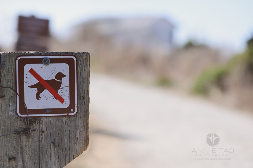 Bay-Area-lifestyle-photography-no-dogs-allowed-sign-at-beach