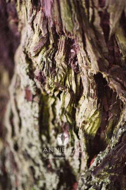 East-Bay-lifestyle-photography-closeup-tree-trunk-redwood-tree
