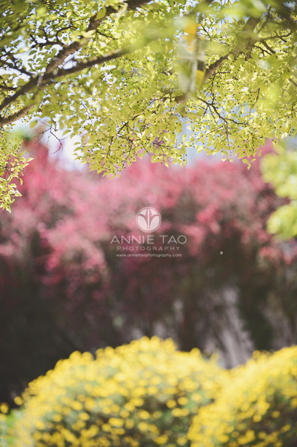 San-Francisco-Bay-Area-commercial-photography-colorful-leaves-on-campus