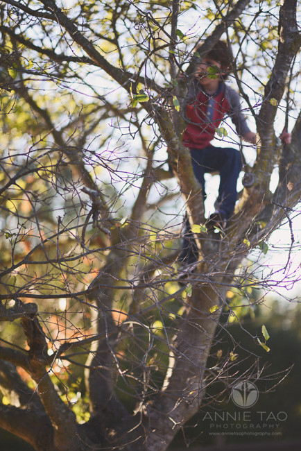 Bay-Area-lifestyle-children-photography-boy-in-tree