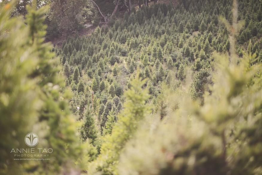 bay-area-lifestyle-photography-christmas-tree-farm