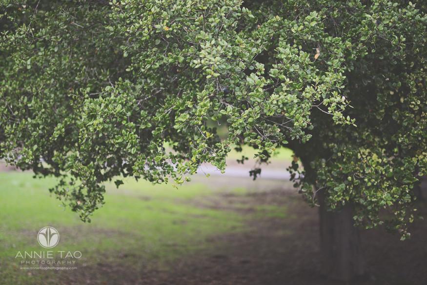 Bay-Area-Palo-Alto-lifestyle-photography-green-tree