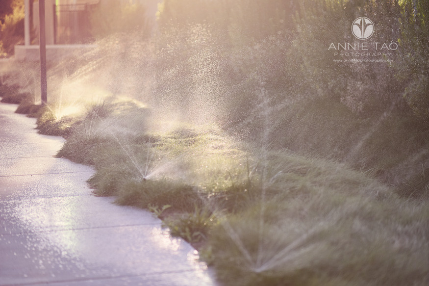 East-Bay-lifestyle-photography-lawn-sprinklers-during-golden-hour