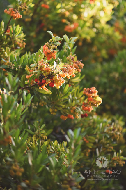 Bay-Area-lifestyle-photography-bush-with-orange-and-red-berries