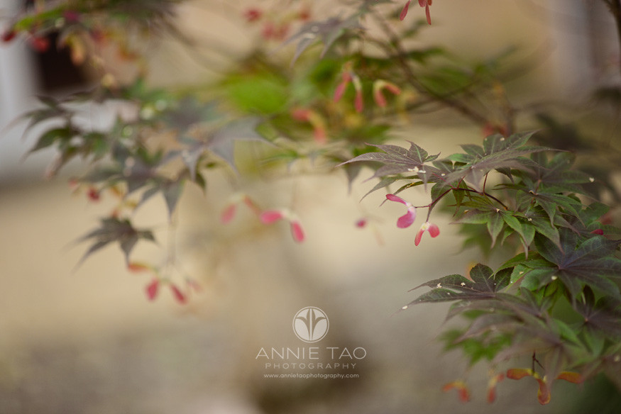 Commercial-education-photography-school-grounds-colorful-tree