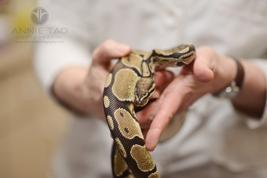 East-Bay-Commercial-Photography-San-Ramon-Bishop-Ranch-Veterinary-vet-holding-snake