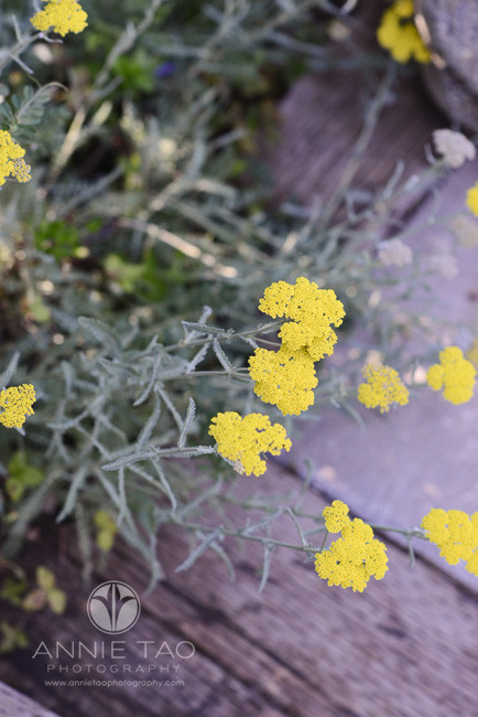 South-Bay-lifestyle-photography-yellow-flowers
