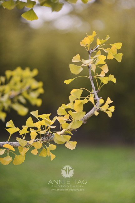 San-Francisco-lifestyle-photography-yellow-triangle-leaves