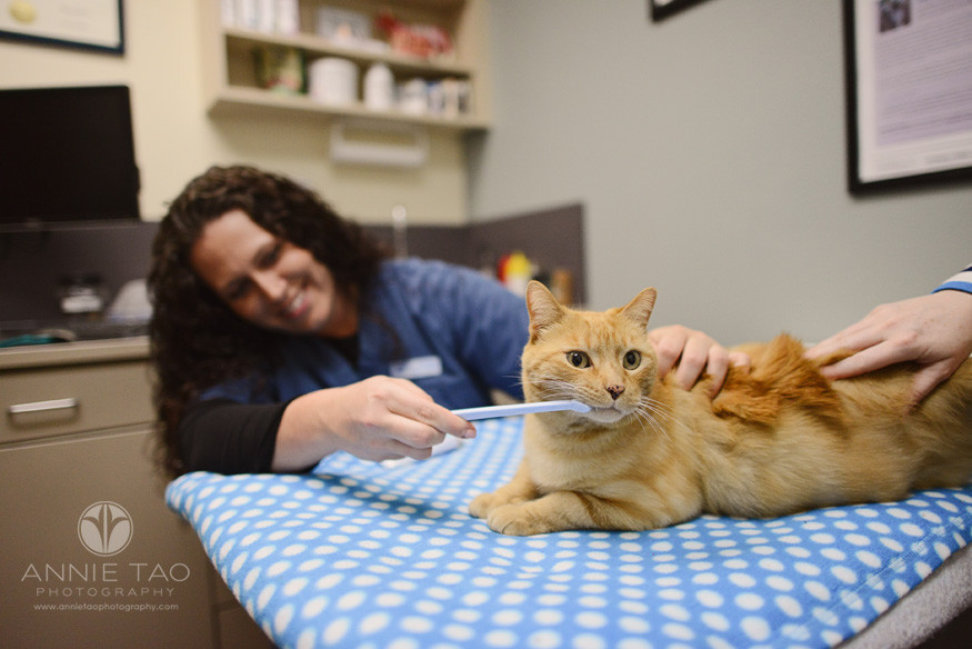 East-Bay-Commercial-Photography-San-Ramon-Bishop-Ranch-Veterinary-vet-brushing-cats-teeth