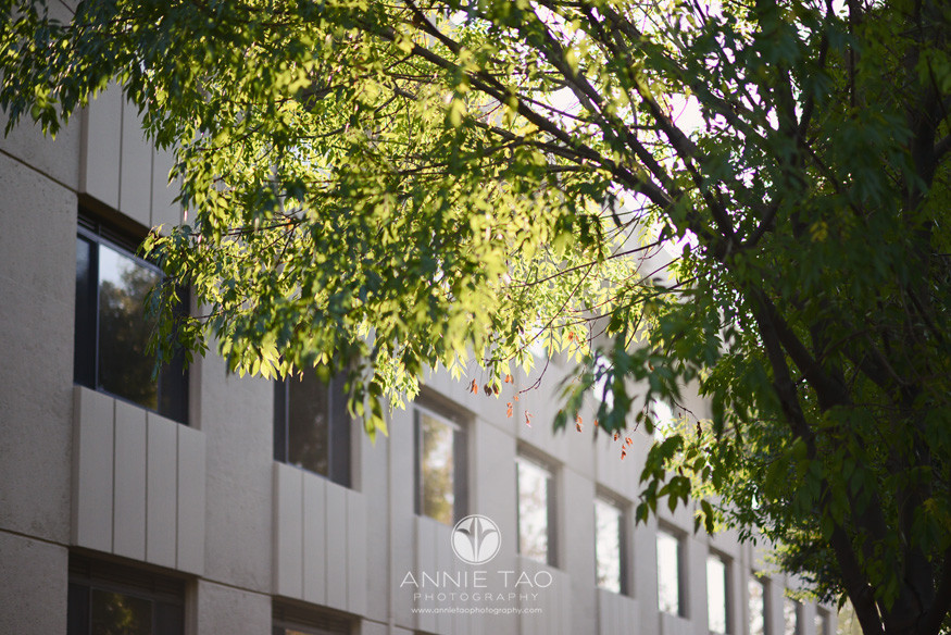 South-Bay-lifestyle-photography-sunlit-trees-at-bellarmine