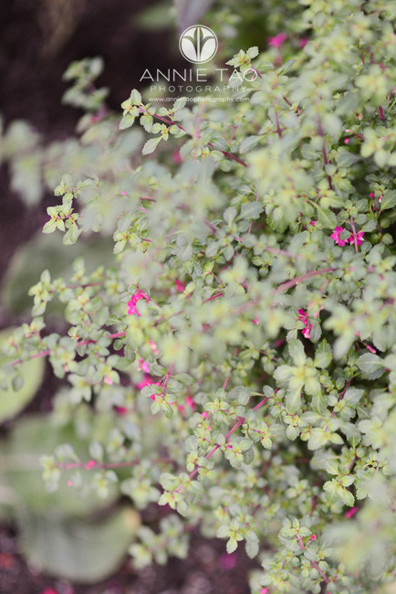 San-Francisco-lifestyle-photography-bush-with-flowers