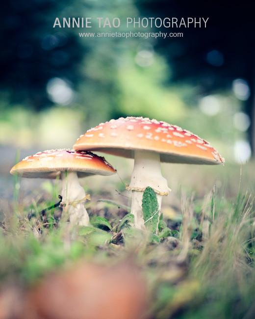 Seattle-lifestyle-photography-mushroom-closeup
