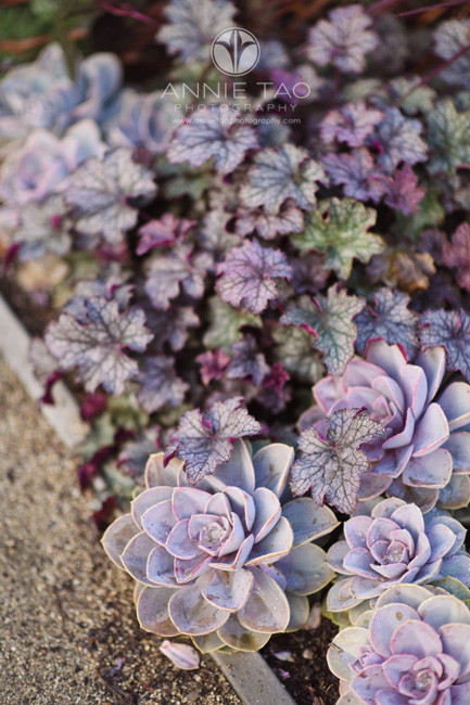 Bay-Area-lifestyle-photography-purple-plants-in-garden