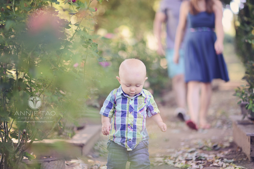East-Bay-lifestyle-baby-photography-bald-baby-walking-through-rose-bushes-looking-down