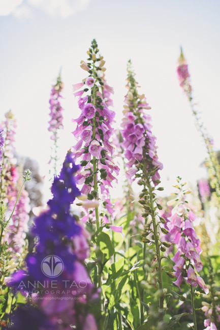 Bay-Area-lifestyle-photography-super-tall-pink-and-purple-flowers