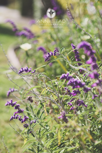San-Francisco-Bay-Area-lifestyle-photography-swervy-purple-flowers-in-backyard