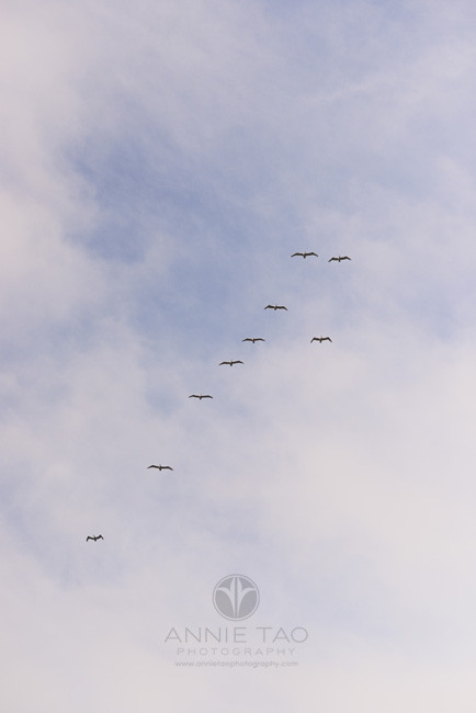 San-Francisco-beach-photography-flock-of-birds-flying-in-the-sky