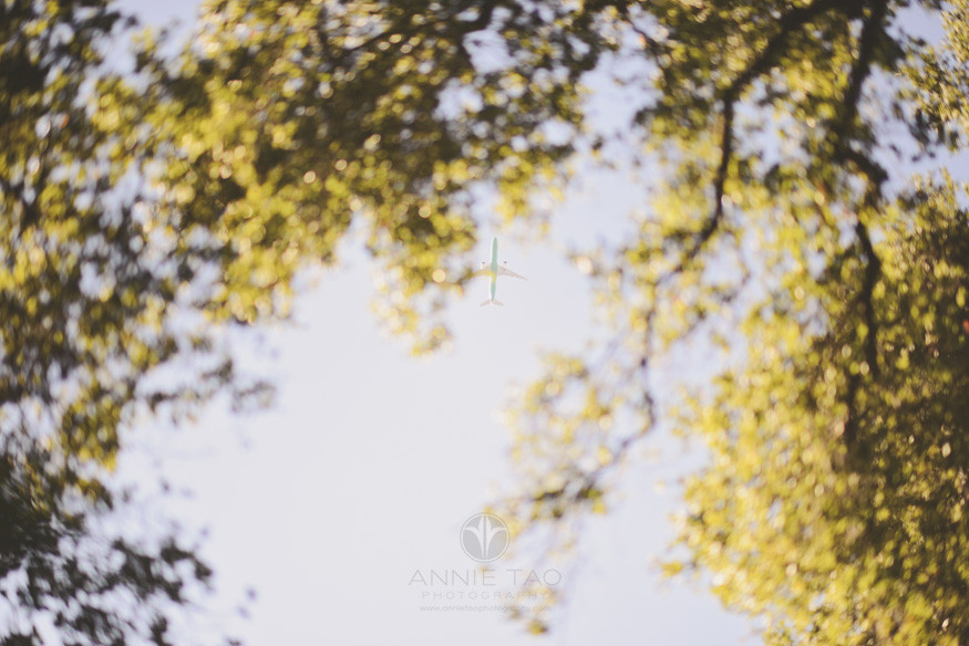 Bay-Area-lifestyle-photography-airplane-flying-overhead-view-thru-trees