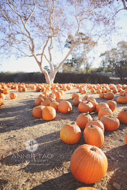 East-Bay-lifestyle-photography-pumpkins-at-a-farm