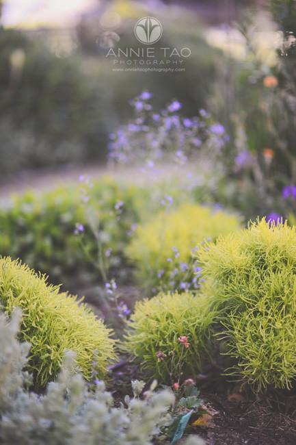 Bay-Area-lifestyle-photography-garden