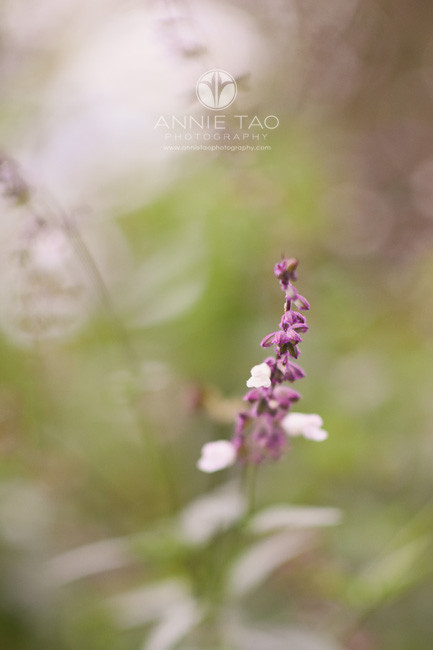 Bay-Area-lifestyle-photography-purple-flowers-in-garden