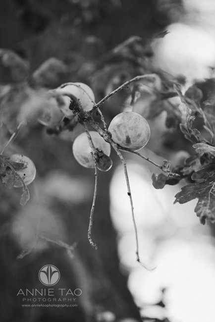 East-Bay-lifestyle-photography-East-Bay-fruit-tree-BxW
