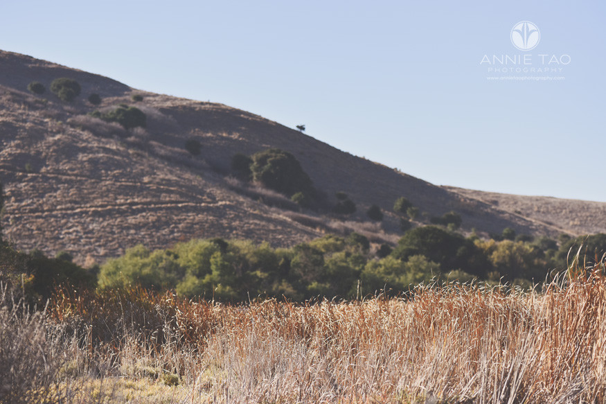 East-Bay-lifestyle-photography-hillside-and-dried-marshland