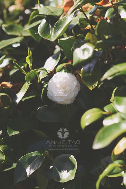 San-Francisco-lifestyle-photography-white-flower-bush