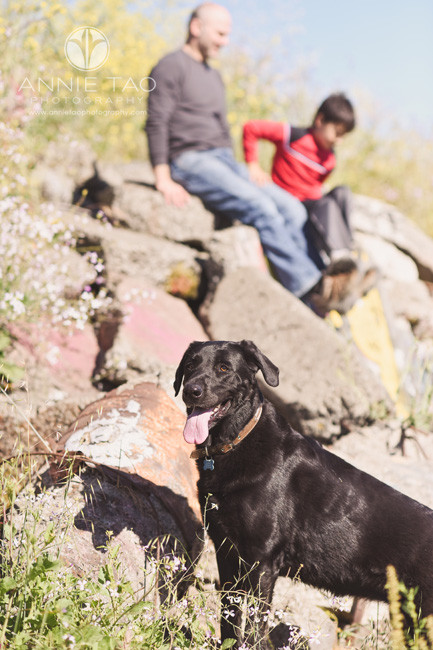 East-Bay-lifestyle-family-photography-dog-protecting-family-on-cliff