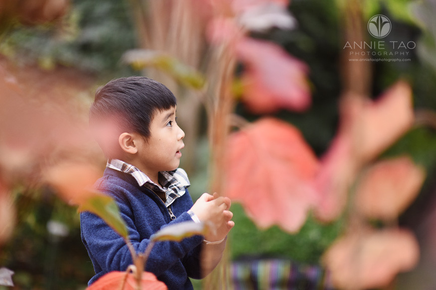 Bay-Area-lifestyle-children-photography-young-boy-looking-up-view-through-red-leaves