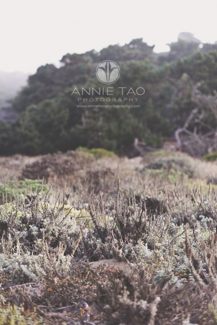 San-Francisco-lifestyle-photography-plants-by-the-beach