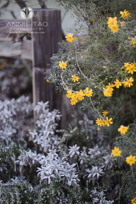 Bay-Area-lifestyle-photography-flowers-by-fence