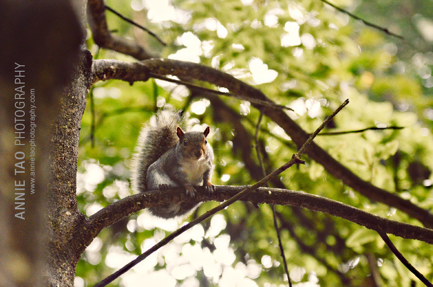 San-Francisco-lifestyle-family-photography-squirrel-looking-at-me-in-woods